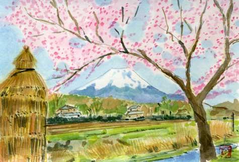 osino-oohasi-sakura.jpg